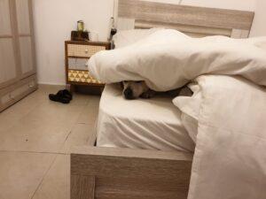 מיטת ילדים מלוכלכת בשערות ושתן של כלבים