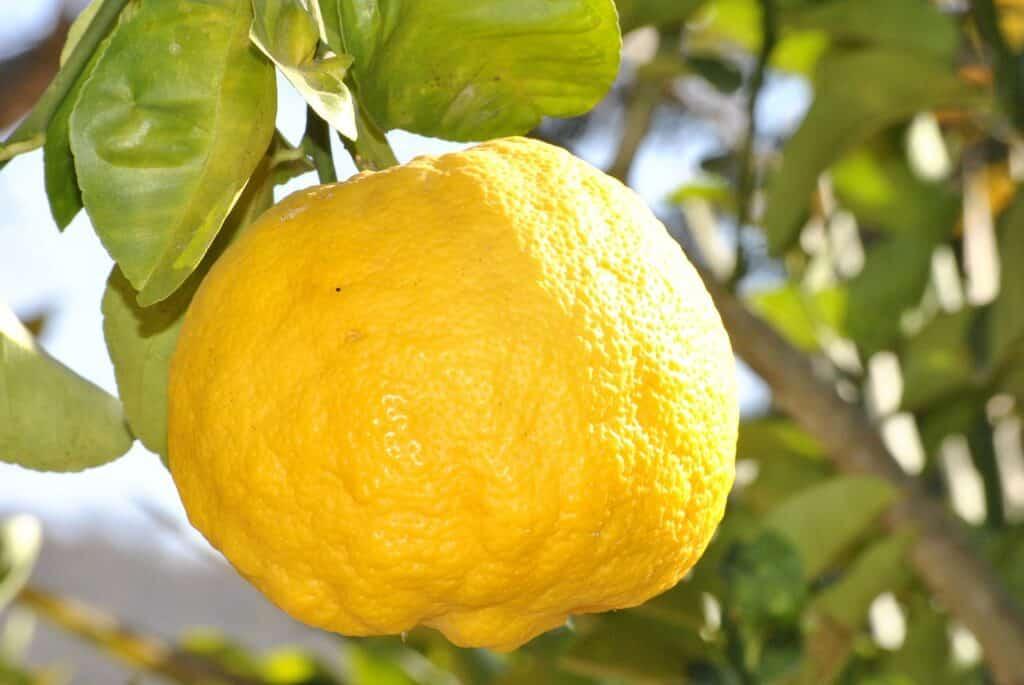 הלימון - הפרי החזק בעולם הניקיון