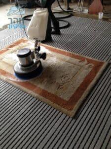 ניקוי שטיח פרוותי אחרי השתנה של חתולה בדירה בשכונת שפירא בתל אביב