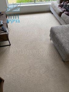 שטיחים מקיר לקיר בסלון קטן אחרי ניקוי מאסיבי מכתמי בוץ